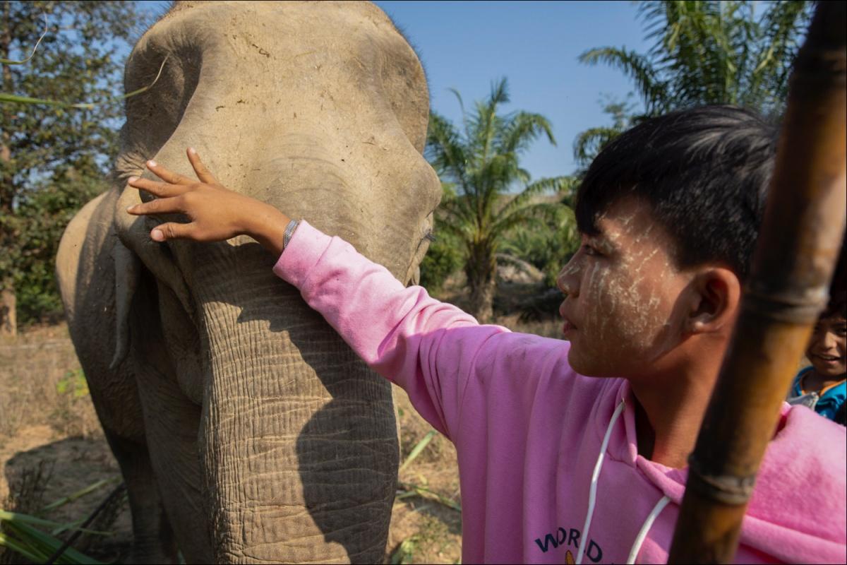 Goodbye Noatomee, our dear elephantfriend